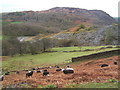 NY3001 : Above Tilberthwaite by Andrew Hill