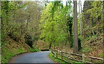 J4681 : Road, Crawfordsburn Country Park by Albert Bridge