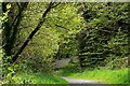 J4681 : Path, Crawfordsburn Glen (1) by Albert Bridge