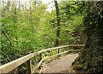 J4681 : Path, Crawfordsburn Glen (2) by Albert Bridge