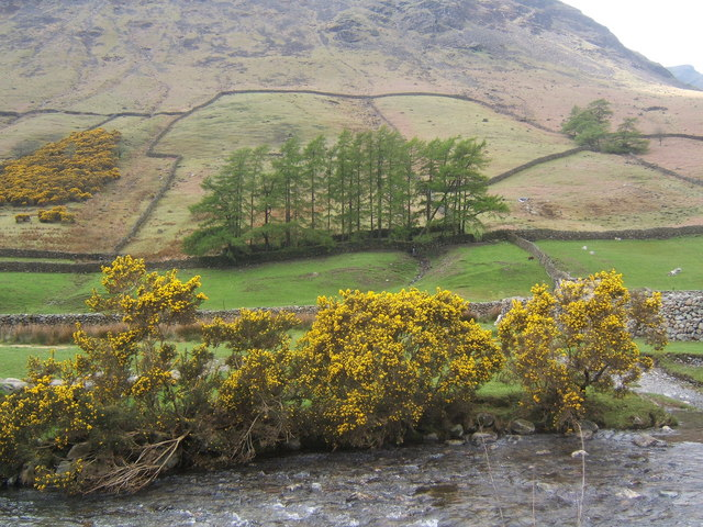 Riverbank gorse and lower slopes of Yewbarrow, Wasdale Head