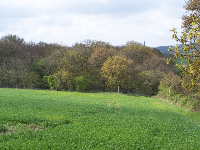 Looking towards Park Coppice