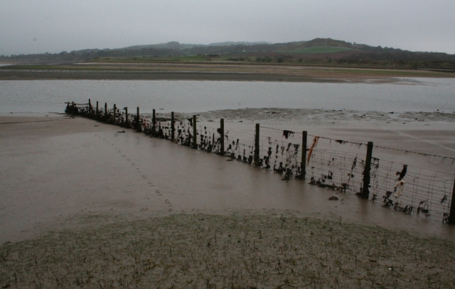 Fence in the Esk Estuary