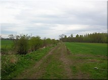 SE6959 : Clearing in Whey Carr Plantation by DS Pugh