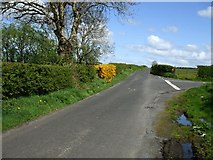 H5472 : Road at Bracky by Kenneth  Allen