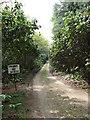 TG0634 : Track through Lodge Plantation by Evelyn Simak