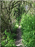 TR0749 : Footpath, looking N, part of the Stour Valley Walk by Nick Smith