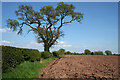 SJ5837 : Ploughed field near Ashacres Farm by Espresso Addict