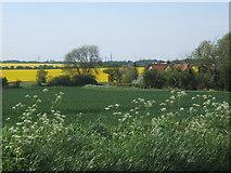 TM0857 : Fields beside Mill Lane by Andrew Hill