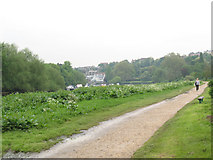 TQ1773 : The Thames Path at Petersham by Stephen Craven