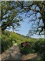 SX3876 : Lane at Underhill by Derek Harper