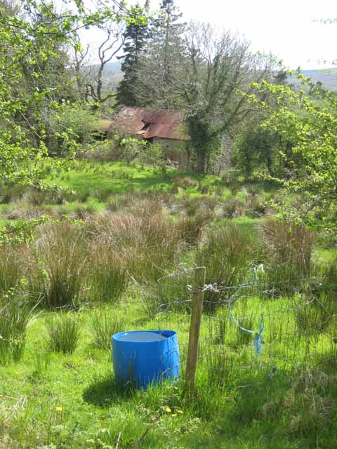 Marshy field and ruined barn above Ballinagleragh