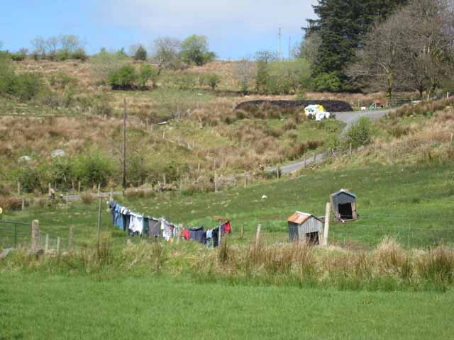 Washing line and kennels