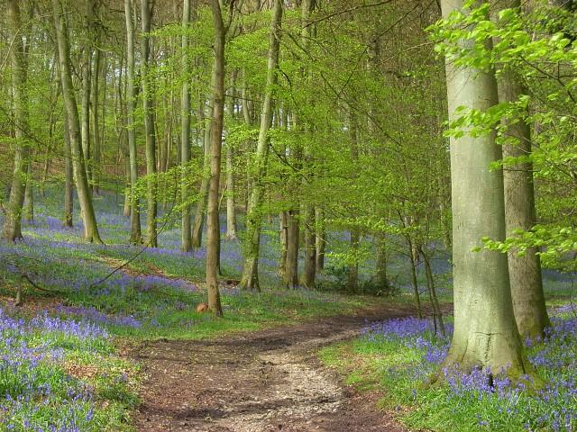 Longhill Hanging Wood