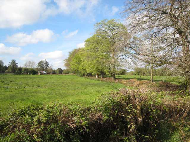 Low-lying field near the southern end of Lough Allen