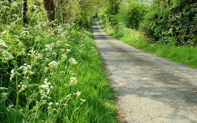 The Drumnaconnel Road near Saintfield