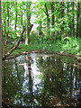 TG3826 : Moat hidden by trees by Evelyn Simak