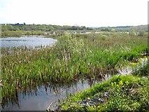 G8132 : Lough Nahon by Oliver Dixon