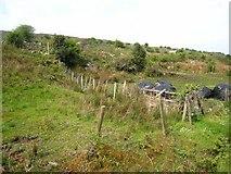 G9114 : Hillside above Arigna by Oliver Dixon