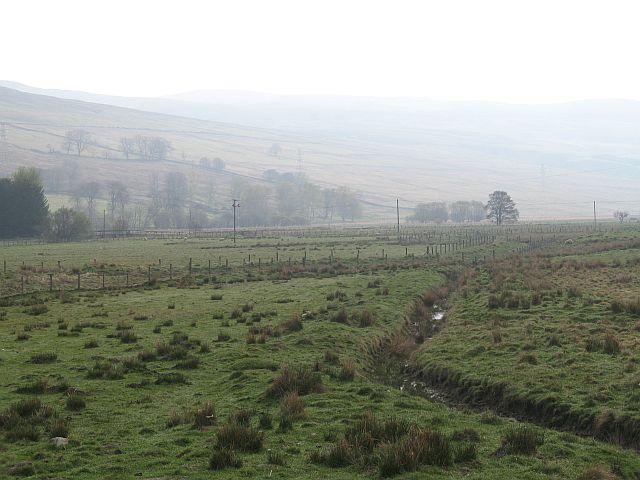Damp pasture, Auchnacloich