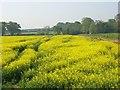 SU8573 : Farmland, Binfield by Andrew Smith