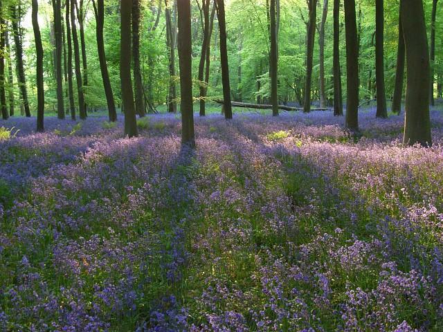 Embley Wood
