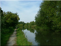 TQ1684 : Grand Union Canal by Phillip Perry