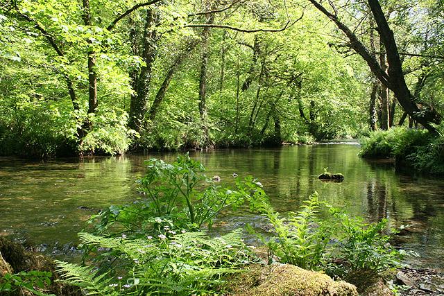 Buckland Monachorum: river Walkham 2