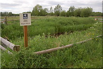 ST4286 : Magor Marsh Nature Reserve in mid-May by Roger Davies