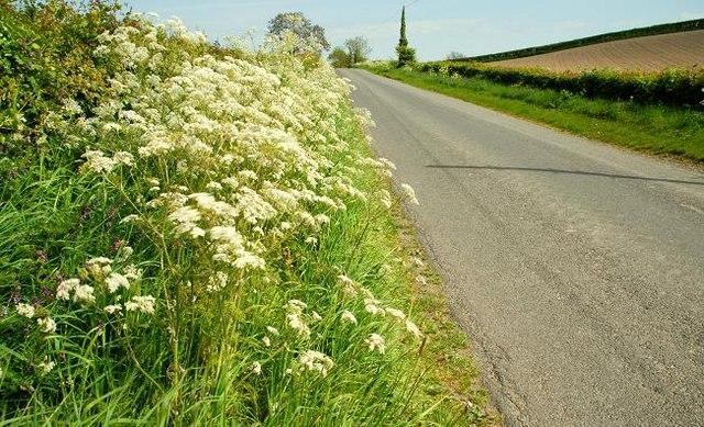 The Ballycastle Road near Greyabbey