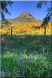 NZ5712 : Roseberry and Bluebells by Mick Garratt