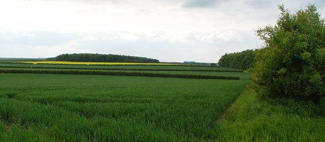 Gabbetis's Plantation and Sir Charles's Clump