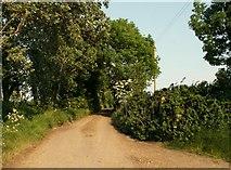 TL9919 : Rectory Lane by Robert Edwards