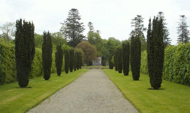 Walk with Irish yews
