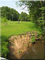 SO7351 : Paddock at Blackhouse Lane with erosion from 2007 floods by Peter Whatley