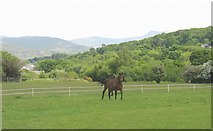 SH5968 : Horse paddock in the shadow of the Carneddau Mountains by Eric Jones