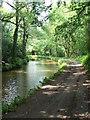 SO3003 : Mon & Brecon canal, near Mamhilad by Colin Madge