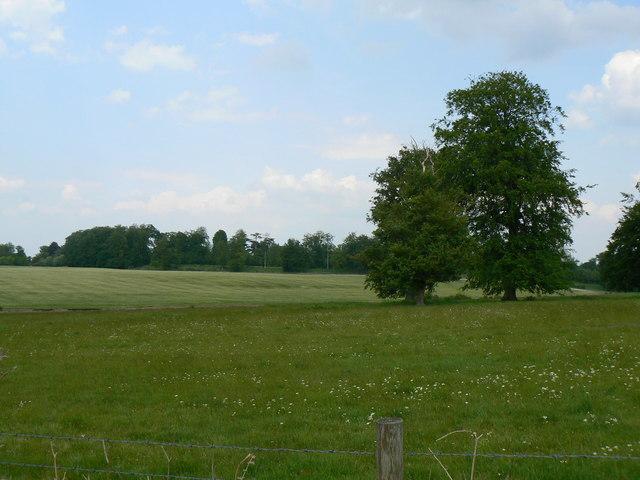 View towards Hackwood Estate.