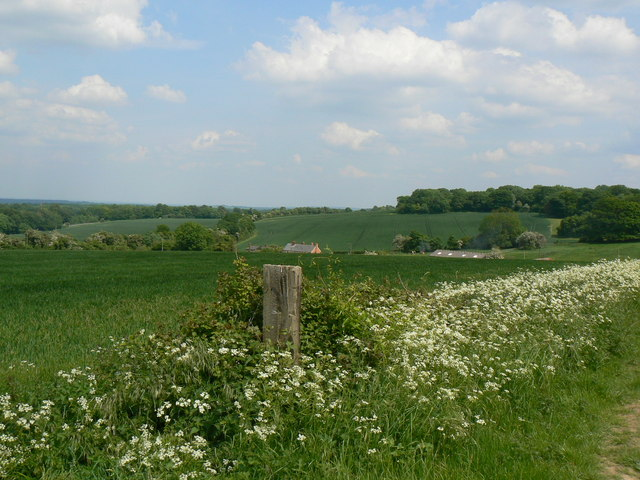Fields & Trees