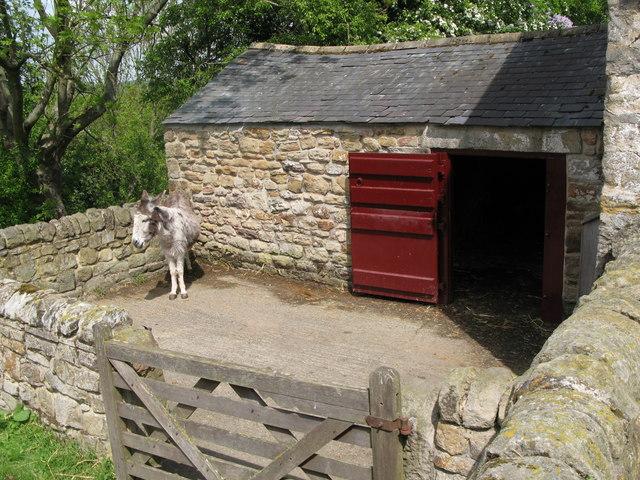 The donkeys' stable at Cherryburn