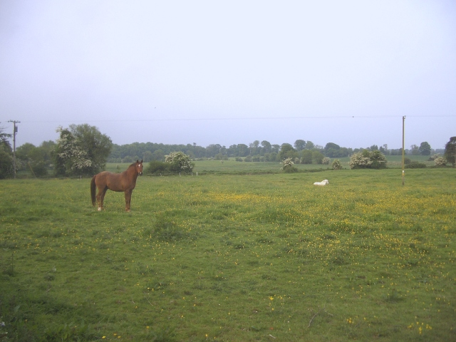 A Lovely Horse, Rathaldron, Co. Meath