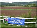 SO7650 : Fields at Leigh Sinton garden centre - 2008 by Peter Whatley