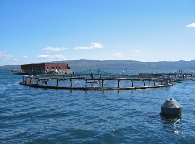 Salmon farm in Portree Bay