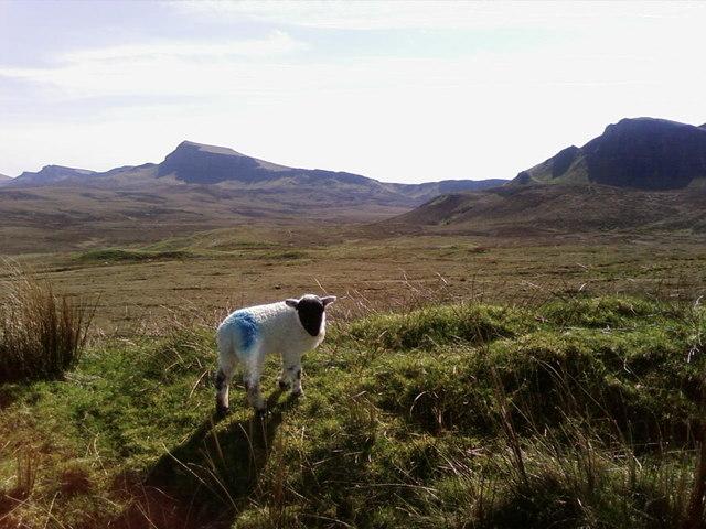 Lambing on the Ridge!