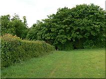 SU6349 : Corner of the field by Sandy B
