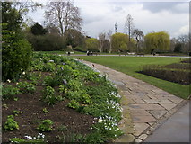 TQ2882 : Queen Mary's Garden by Shaun Ferguson