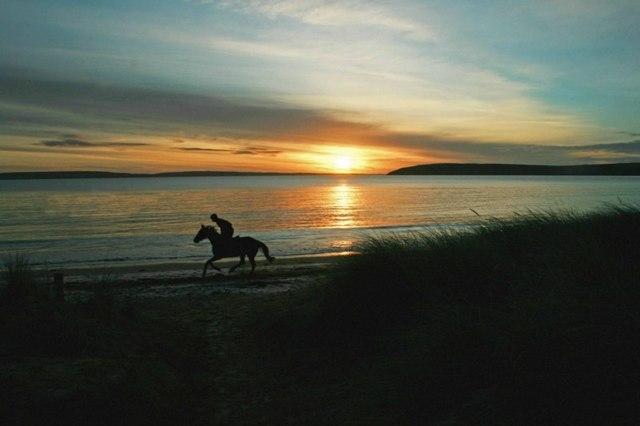 Gallop at sunrise