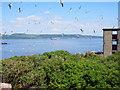 NT2080 : Inchmickery, looking towards the Fife coast by Iain McB
