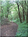 SO2687 : Churchtown Woods by Tim Heaton
