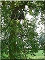 SU6459 : Tree Hide by Sandy B